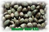 Sensas Monster Hanf XXL 0,5kg - neue Version 2018